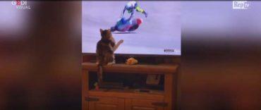 Macja Prek Ekranin