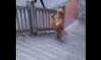 Qeni1